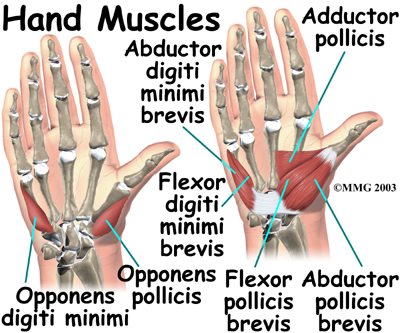 Grip Muscles
