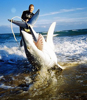 shark fishing - a guide to fishing for shark from the surf., Fishing Bait
