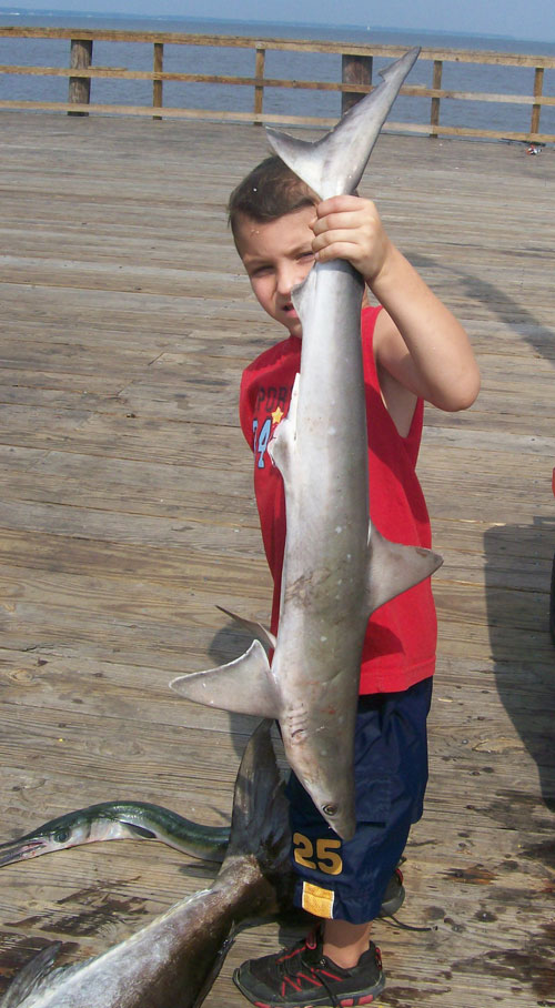 Baby Blacktip Shark Pier Fishing