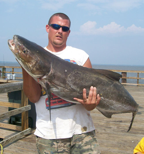 Virginia Shark Fishing Beach Charters